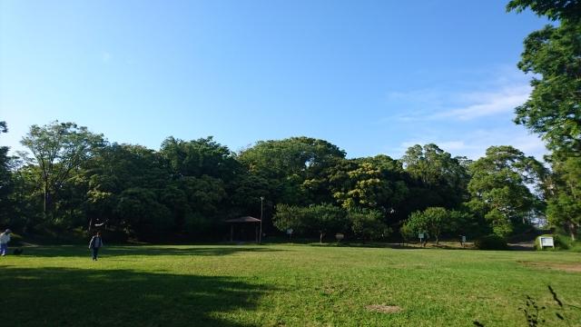 初夏の散歩はピクニック気分で近所の公園に出かけてみよう